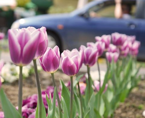 Virágokkal a lélegző Dombóvárért