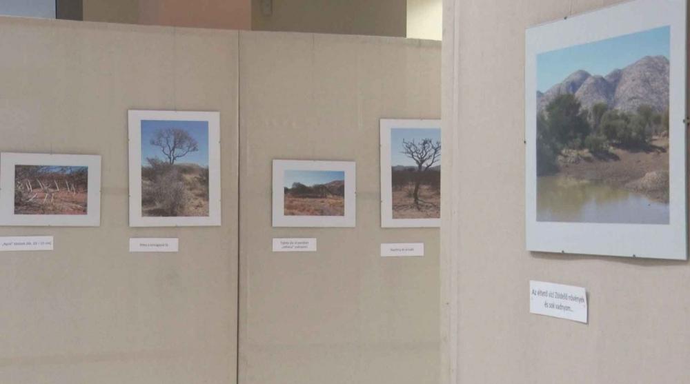 Fényképek a Kalahári-sivatag növényeiről és állatairól