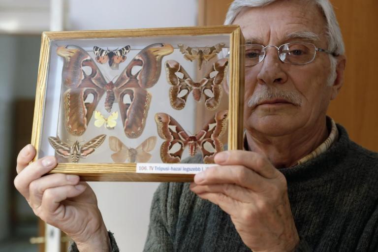 """Kétszer lett """"pillangóvadász"""" dr. Banizs Károly"""