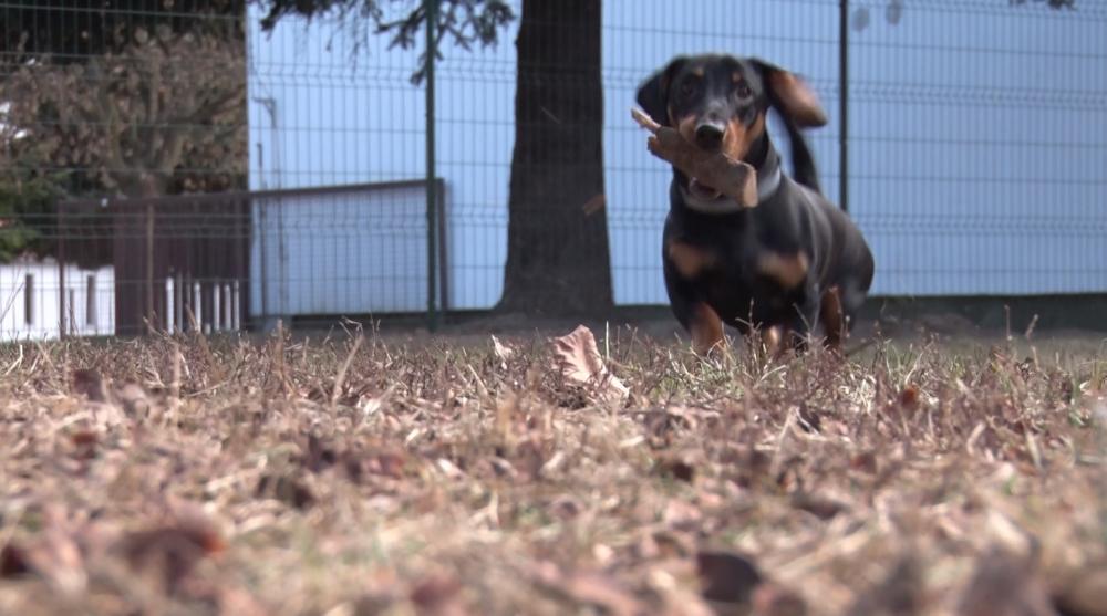 Zárt kutyafuttatókat alakíttat ki az önkormányzat