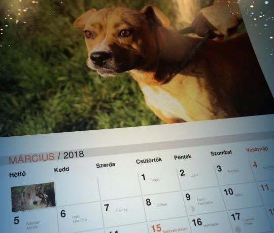Gazdátlan kutyákra költik az adományt